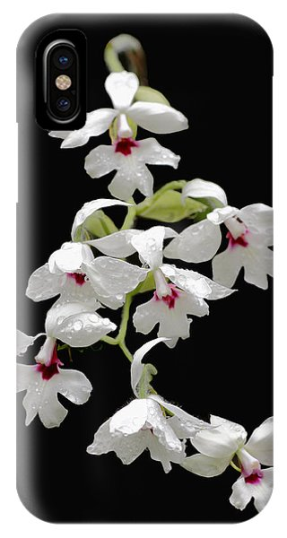 Calanthe Vestita Orchid IPhone Case