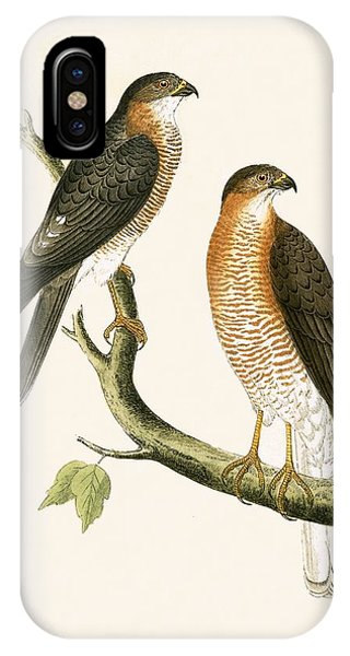 Calcutta Sparrow Hawk IPhone Case