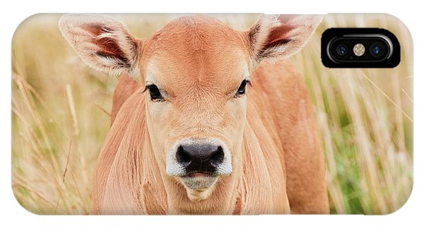 IPhone Case featuring the photograph Calf In The High Grass by Nick Biemans