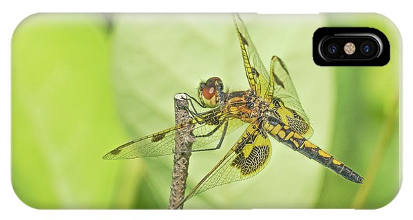 Calico Pennant IPhone Case