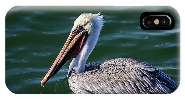California Brown Pelican In Late Summer IPhone Case