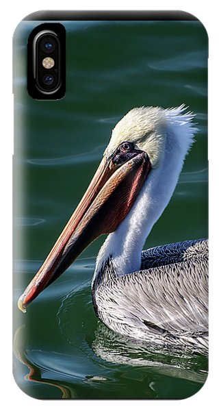 California Brown Pelican In Late Summer IPhone Case