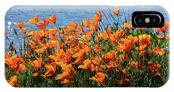 California Poppies By Richardson Bay IPhone Case