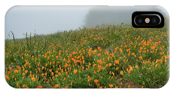 California Poppies On Volcan Mountain IPhone Case