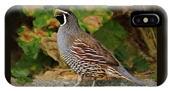 California Quail Rooster IPhone Case
