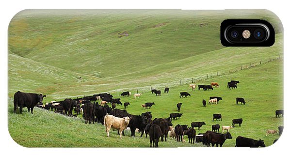 California Ranching IPhone Case