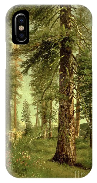 California iPhone Case - California Redwoods by Albert Bierstadt
