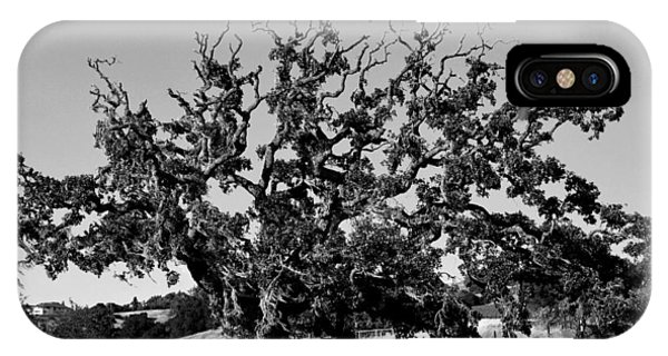 California Roadside Tree - Black And White IPhone Case
