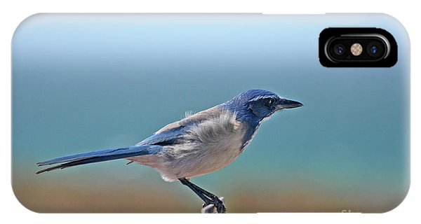 California Scrub Jay IPhone Case