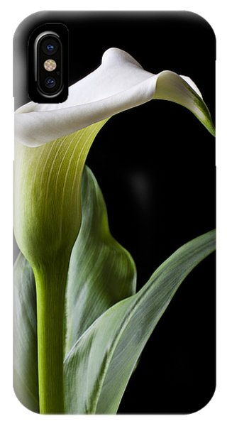 Calla Lily With Drip IPhone Case