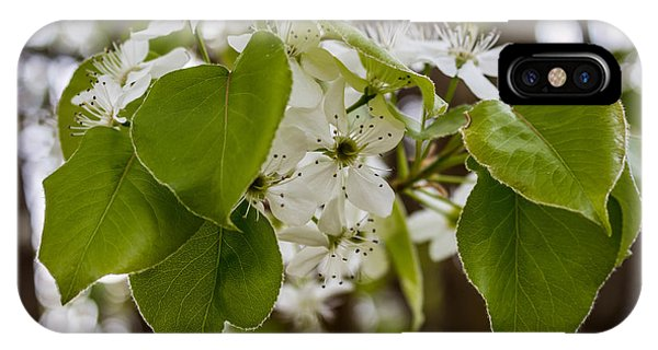 Callery Pear Tree Bloom IPhone Case