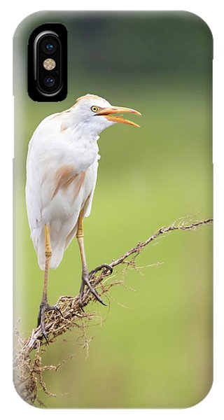 Calling For My Mate IPhone Case