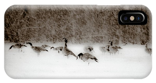 Canada Geese Feeding In Winter IPhone Case