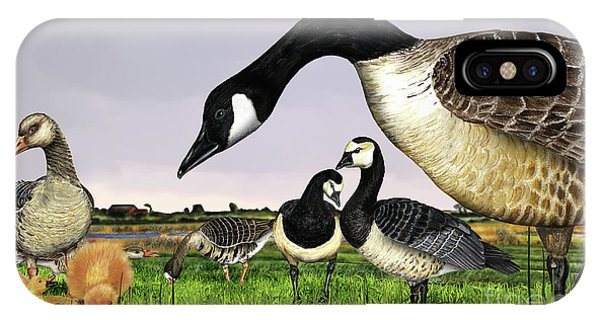 Canada Goose - Greylag Goose With Fledglings Chicks - White Fronted Goose -  Barnacle Goose IPhone Case