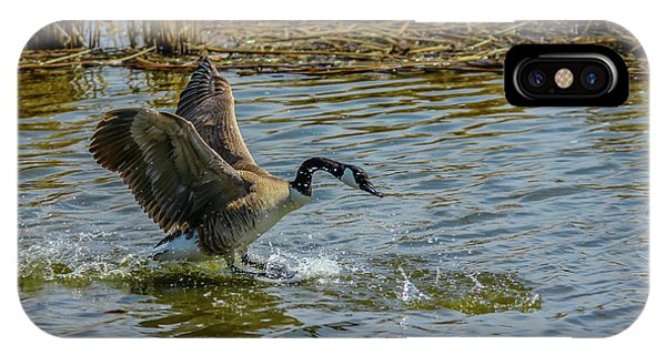 Canada Goose Takes Flight, Frank Lake, Alberta, Canada IPhone Case