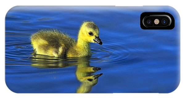 Canada Gosling Goes For A Swim IPhone Case
