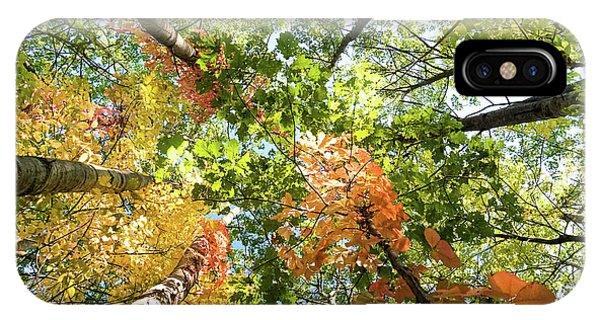 Canadian Foliage IPhone Case