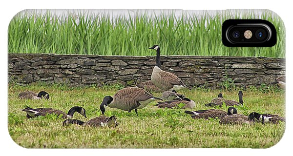 Canada Goose iPhone Case - Canadian Geese by Martin Newman