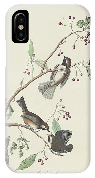 Titmouse iPhone Case - Canadian Titmouse by Dreyer Wildlife Print Collections