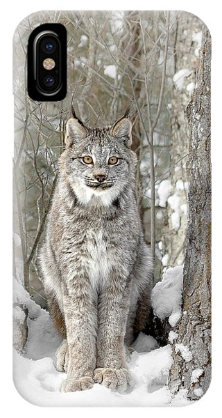 Canadian Wilderness Lynx IPhone Case