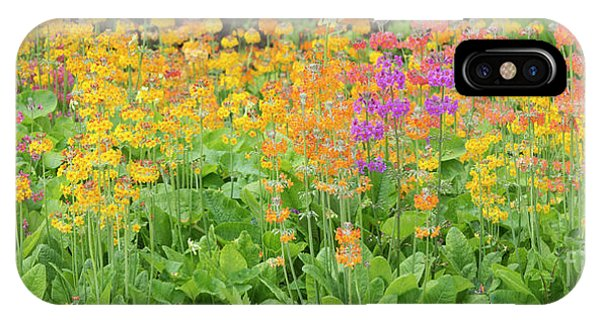 Hybrid iPhone Case -  Candelabra Primula Flowers Panoramic by Tim Gainey
