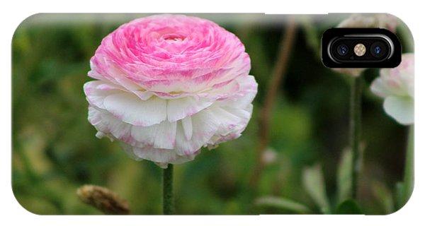 Candy Stripe Ranunculus IPhone Case