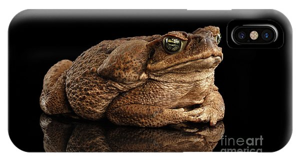 Cane Toad - Bufo Marinus, Giant Neotropical Or Marine Toad Isolated On Black Background IPhone Case