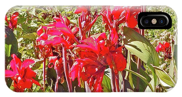 Canna Lilies At Cheekwood Gardens IPhone Case