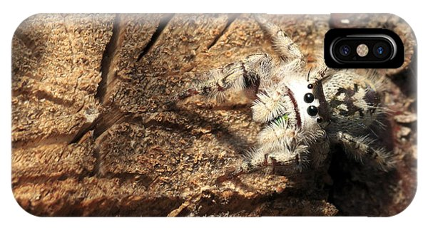 Canopy Jumping Spider IPhone Case