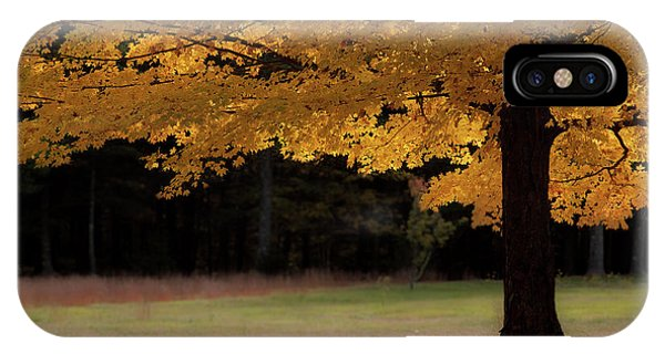 Canopy Of Autumn Gold IPhone Case