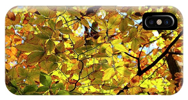 IPhone Case featuring the photograph Canopy Of Autumn Leaves  by Angie Tirado