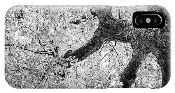 Reach iPhone Case - Canopy Of Autumn Leaves In Black And White by Tom Mc Nemar