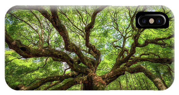 Canopy Of Color At Angel Oak Tree  IPhone Case