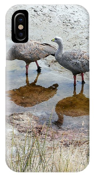 Cape Baron Geese On Maria Island 2 IPhone Case