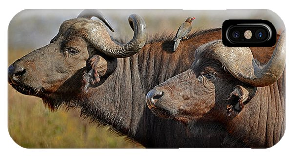 Cape Buffalo And Their Housekeeper IPhone Case