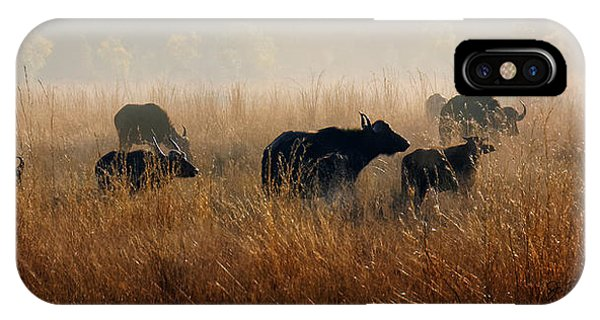 Cape Buffalo Herd IPhone Case