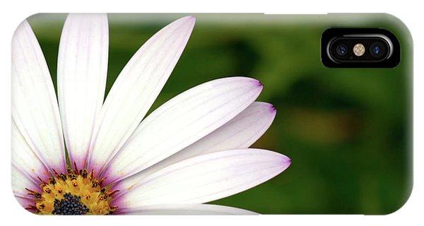 Cape Daisy IPhone Case