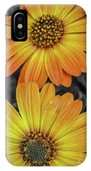 Cape Daisy's - Orange IPhone Case