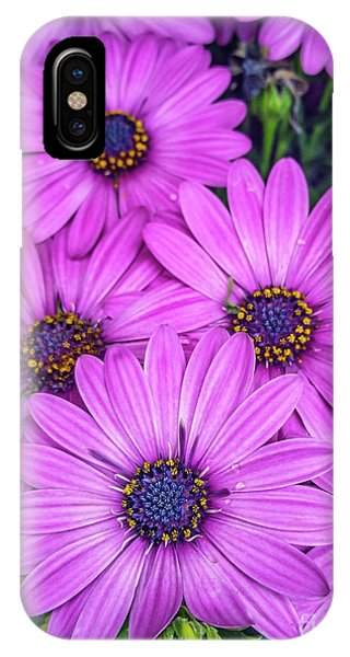 Cape Daisys - Purple IPhone Case