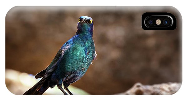 Starlings iPhone Case - Cape Glossy Starling by Jane Rix