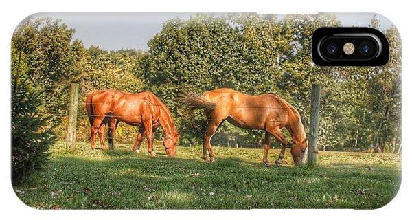 1006 - Caramel Horses I IPhone Case