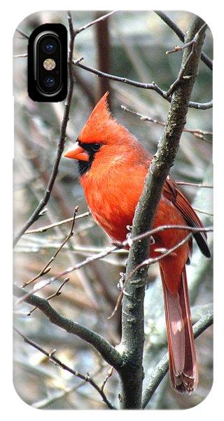 Cardinal 2 IPhone Case