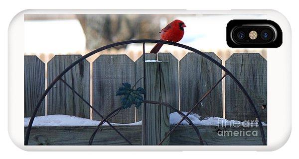 Cardinal 3 IPhone Case