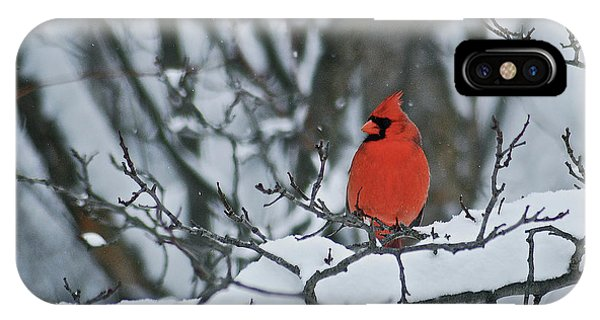Cardinal And Snow IPhone Case
