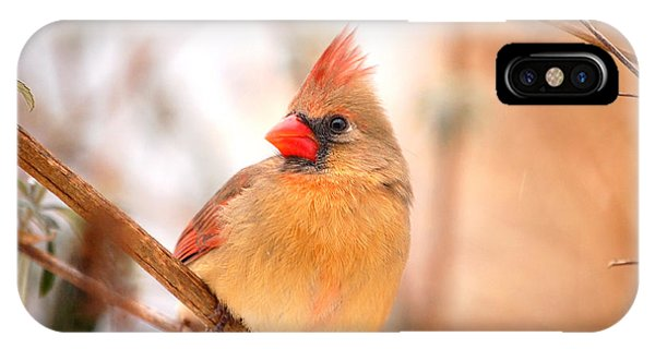 Cardinal Bird Female IPhone Case