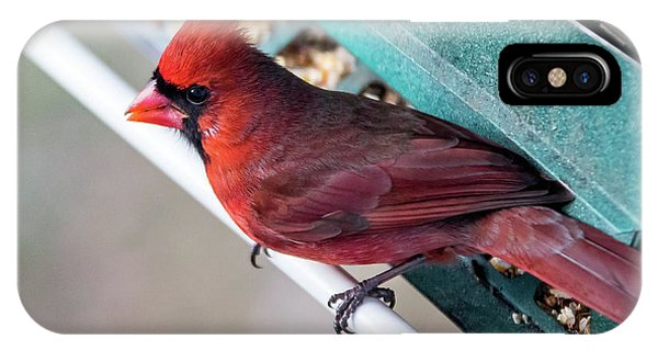 Cardinal Close Up IPhone Case