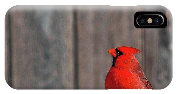 Cardinal Drinking IPhone Case