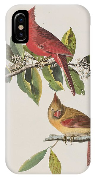 Cardinal Grosbeak IPhone Case