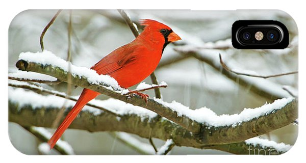 Finch iPhone Case - Cardinal In Snow by Laura D Young