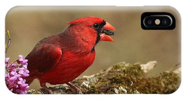 Cardinal In Spring IPhone Case